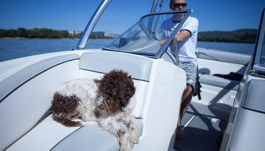 04.08.2012 * DANUBE * (SK) * SUMMER FUN WITH LAGOTTO GANG
